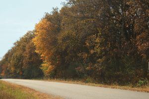 Photo of fall trees along a paved road