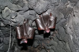 Photo of faux bats hanging from the ceiling