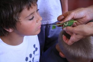Photo of a boy looking at a monarch caterpillar