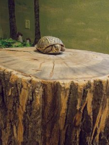 Photo of a turtle on a stump