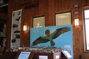 Photo of an osprey nest exhibit