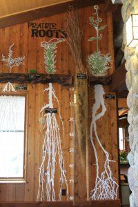 Photo of prairie roots exhibit