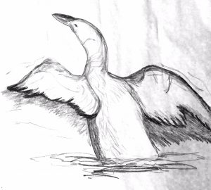 Photo of a swan drawing