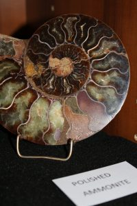 Photo of an ammonite