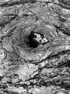 Photograph of tree bark
