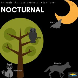 Graphic with nocturnal animals