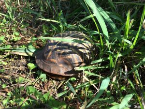 Photo of turtle in the grass
