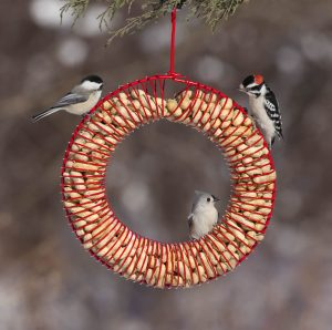 Photo of a wreath feeder