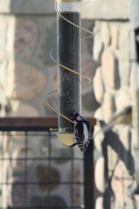 Photo of a spiral nyjer feeder