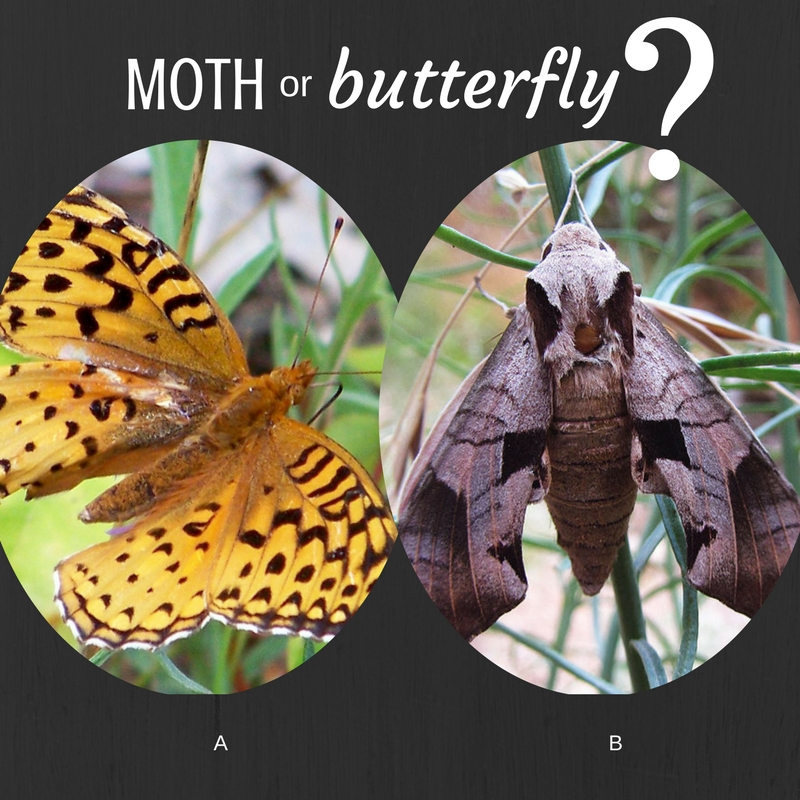 Butterfly and Moth Identification