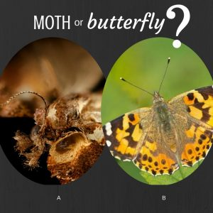 Graphic of a moth and butterfly