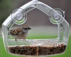 Photo of a bird at a window feeder