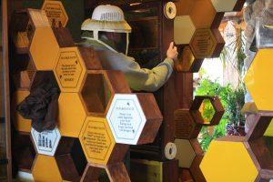 Photo of an indoor beehive
