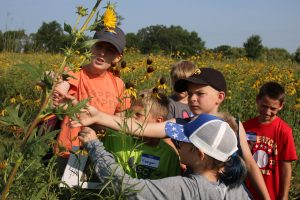 Photo of a naturalist and kids looking at a compass plant