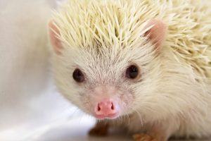 Photo of a hedgehog