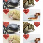 Graphic of animal Valentines