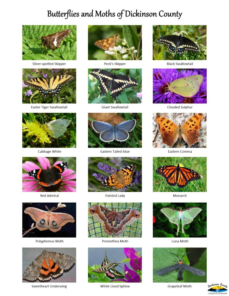 Image of a butterflies and moths field guide