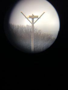Photo of osprey through a telescope