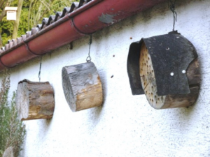 Photo of bee homes