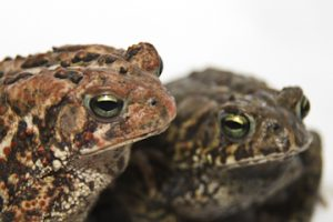 Photo of toads different colors