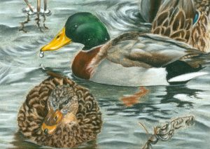 duck stamp winner