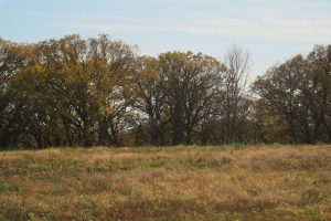 Photo of a grove of trees at the Little Sioux Savannah
