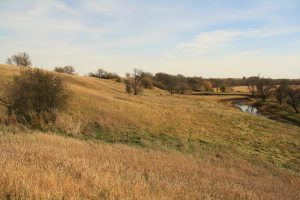 Photo of a grassy area along the Little Sioux River