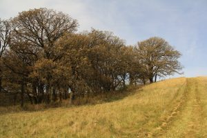 Photo of trees at the top of a grassy hill