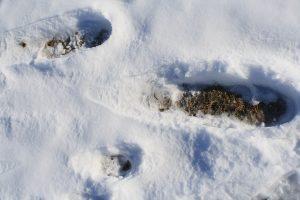 Photo of boot tracks in the snow