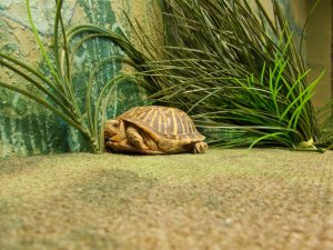 Photo of a turtle in fake grasses
