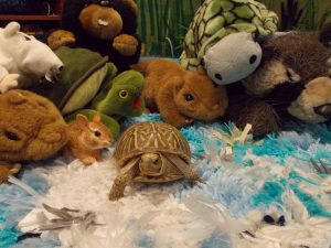 Photo of turtle with stuffed animals