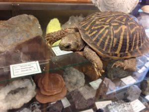 Photo of a turtle on a glass case