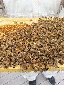 Photo of honeybees on honeycomb