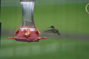 Photo of a hummingbird