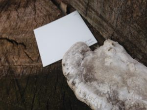 "Photo of fungus growing on a log with ""linen"" paint sample"