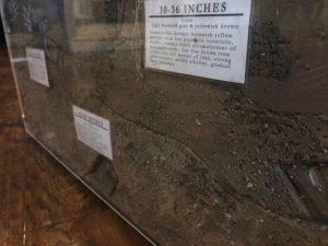 Photo of a soil profile