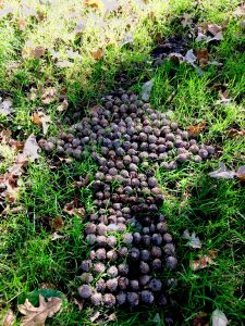 Photo of an arrow made out of acorns