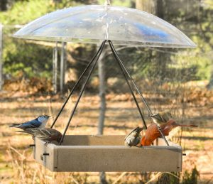 Photo of birds on a platform feeder