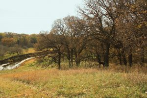 Photo of oak savanna