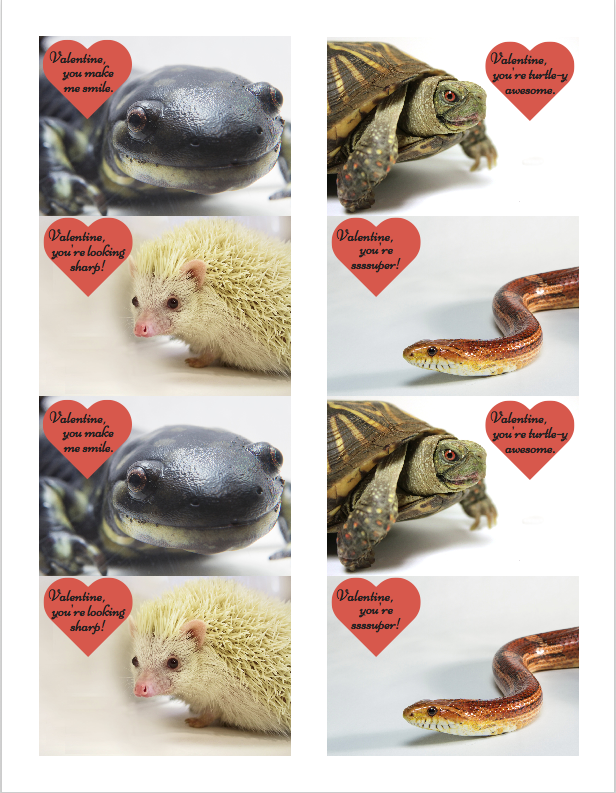 Graphic of animal Valentines