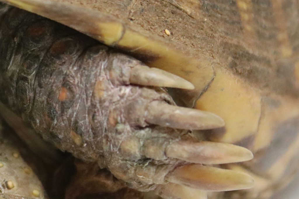 Close-up claws