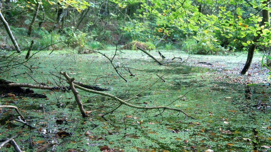 Photo of a bog