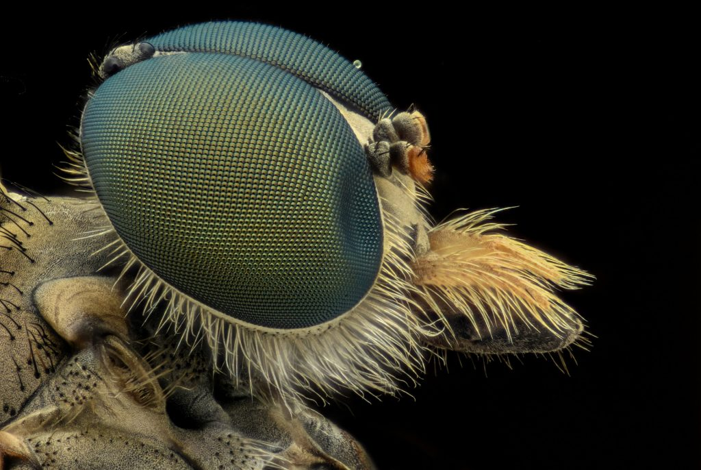 Photo of a bee eye