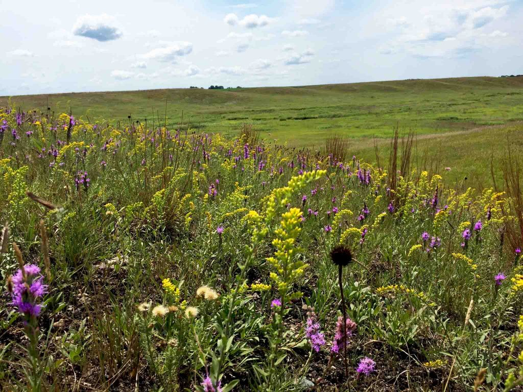 Photo of prairie in bloom
