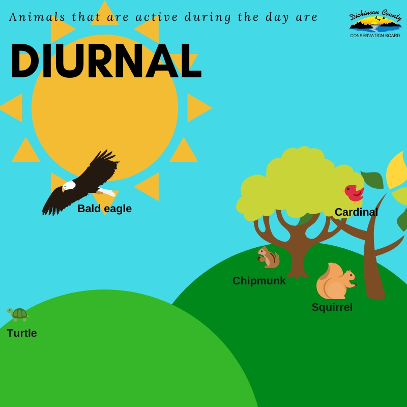 Graphic aboutt being diurnal