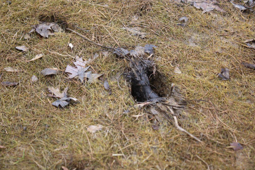 Photo of deer track in mud