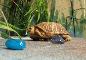 Photo of a turtle in a play wetland