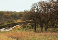 trees along the Little Sioux River