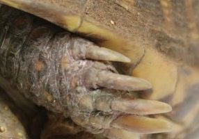 Close-up photo of claws