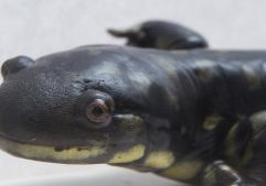 Photo of a salamander